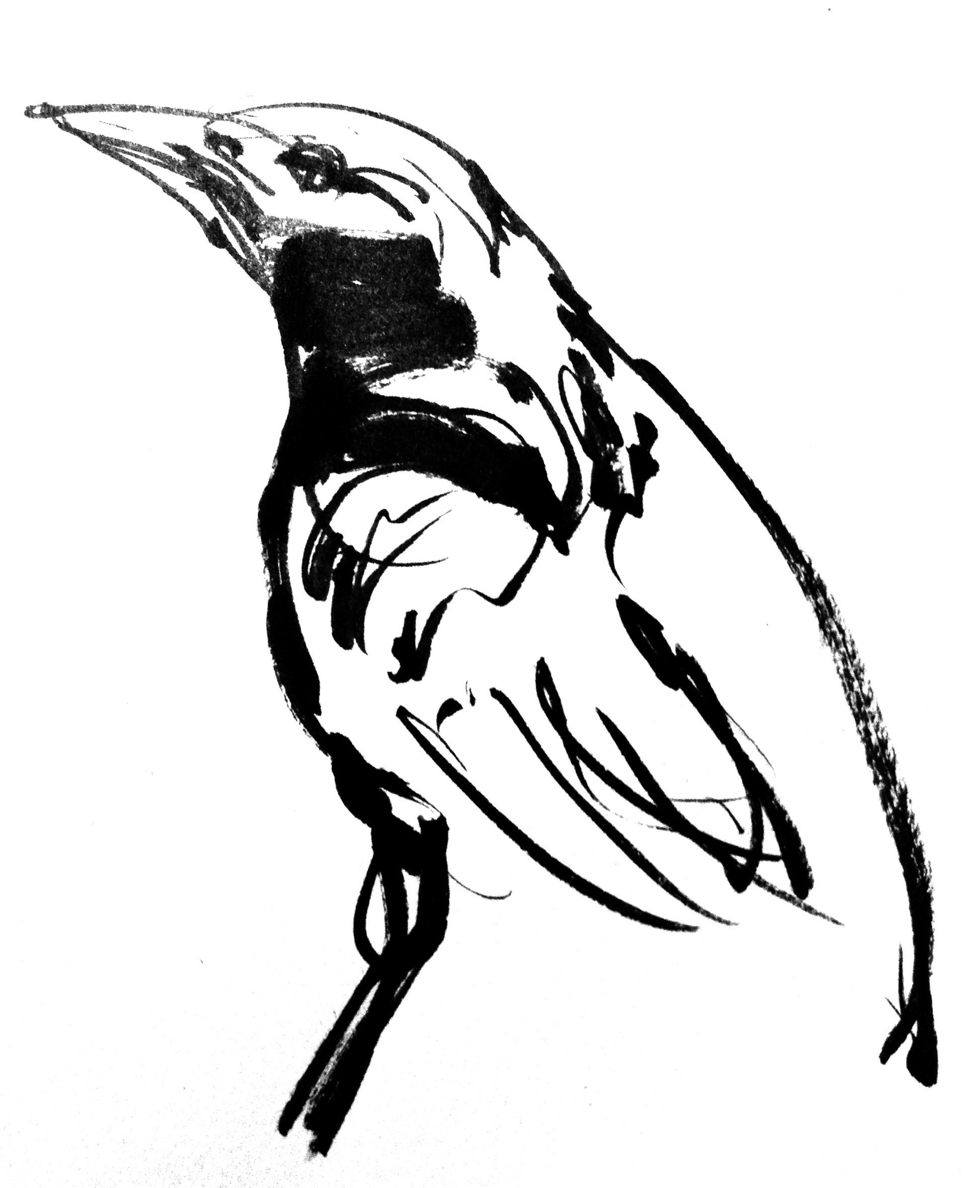 Ploomers Starling Copy